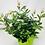 "Thumbnail: Pot Rose 01 🥀 (6"")"