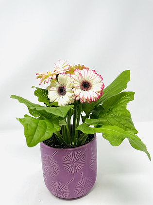 Star ⭐️ Ceramic with flower 01