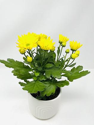 Arc Ceramic with flower 🌸 08