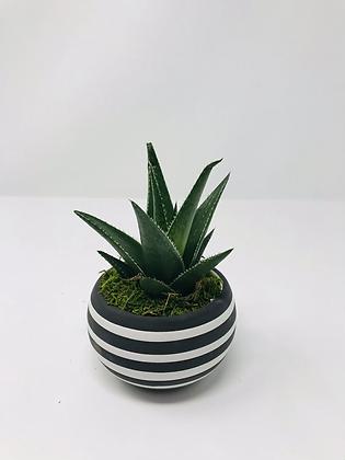 2020P15 - Urban Life Planter