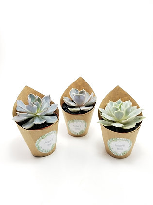 "Favour with Decorative Paper on 2.25"" Vinyl Pot"