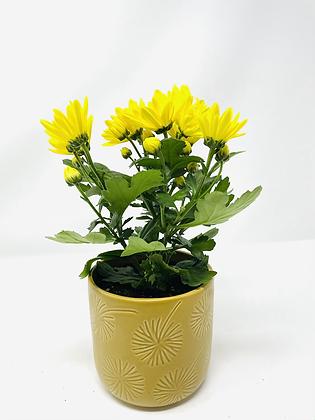 Star ⭐️ Ceramic with flower 02