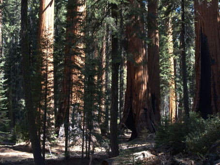 Sequoia NP closes just about everything!