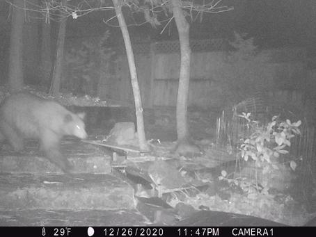 More wildlife!