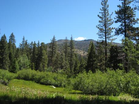 Trip Report:  Carson-Iceberg Wilderness