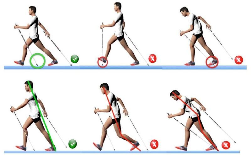 Техника ходьбы с палками на соревнованиях