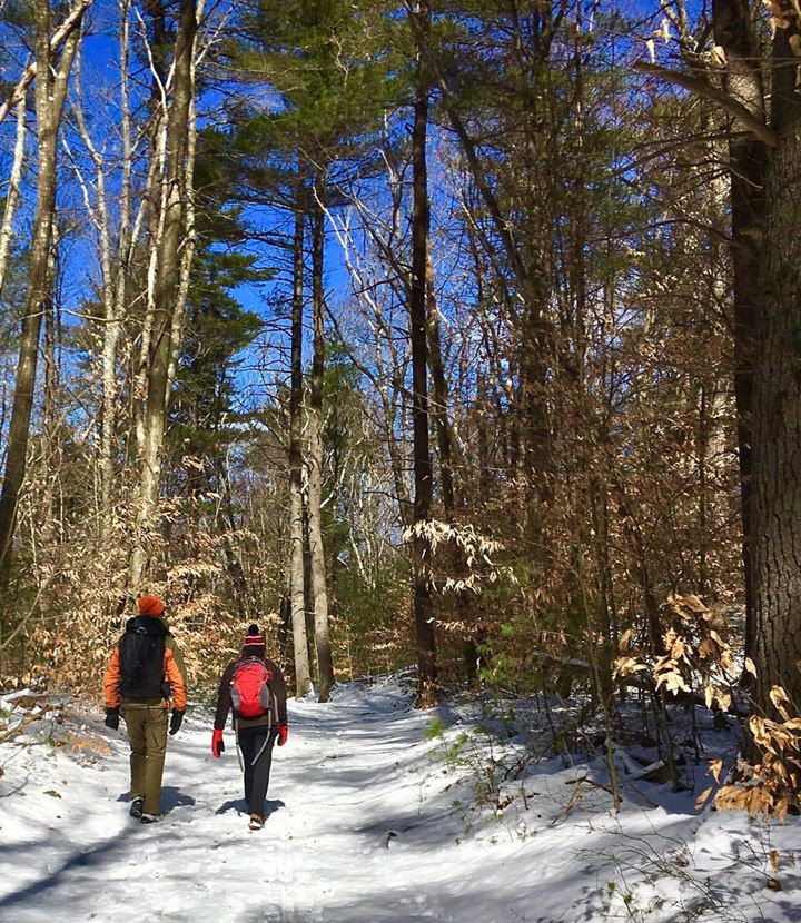 Two people walking on a forest trail during the winter
