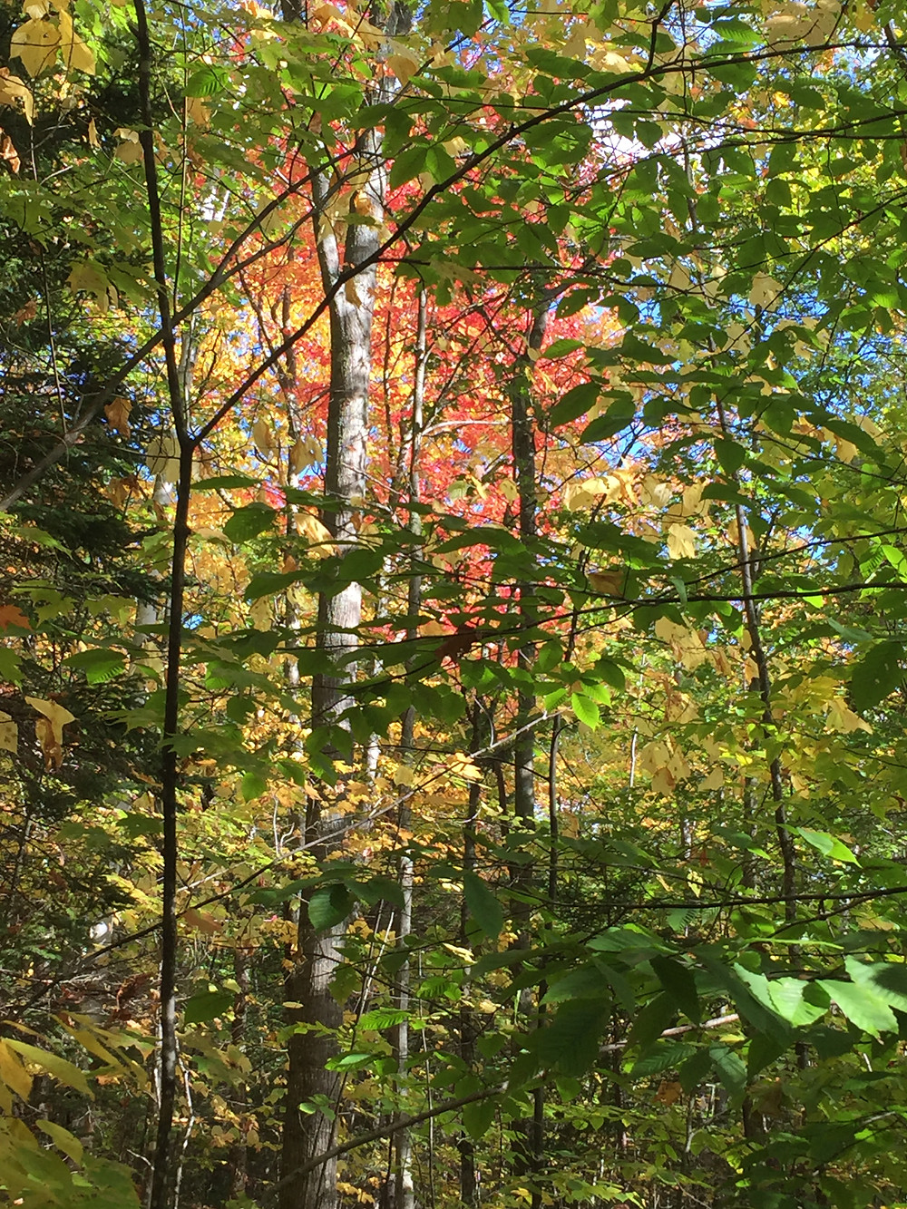Green, red, and yellow leaves hang off trees while a blue sky is barely visible in the background