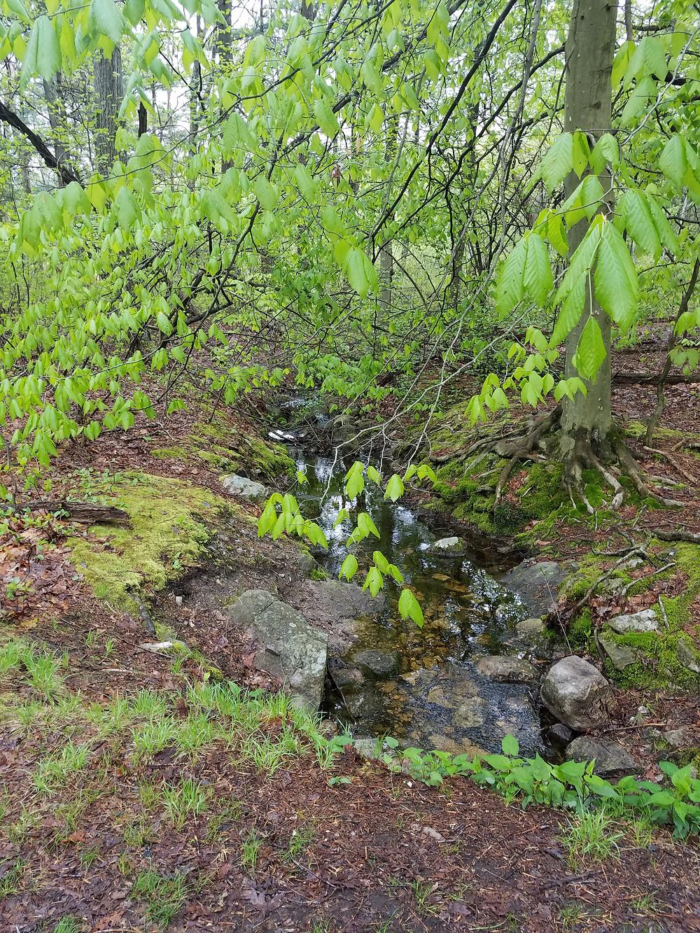 Creek at Blue Hills