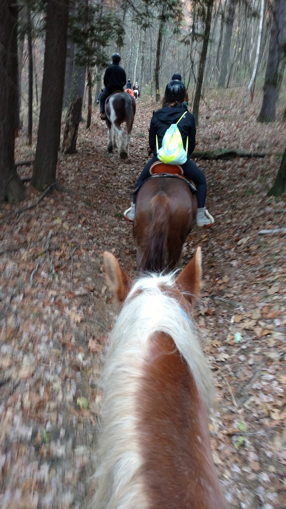 people riding horses in the woods