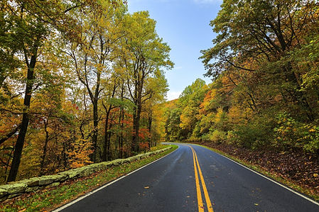 New England road in the forest