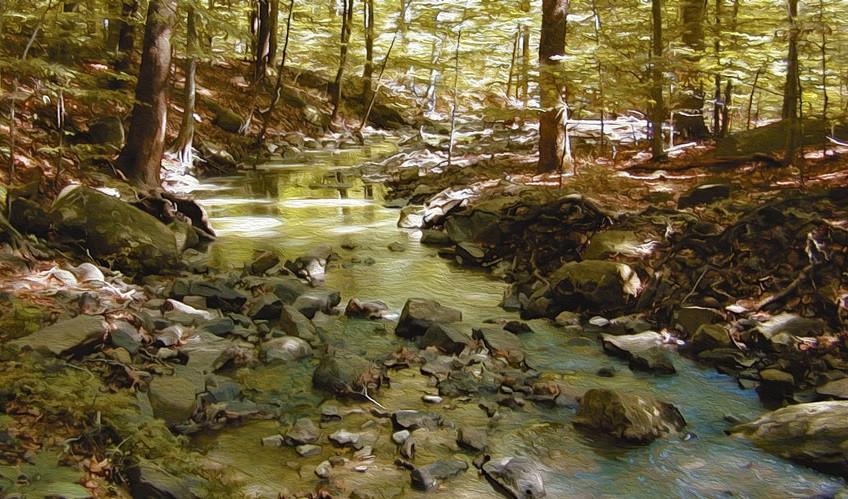 brook running through the forest