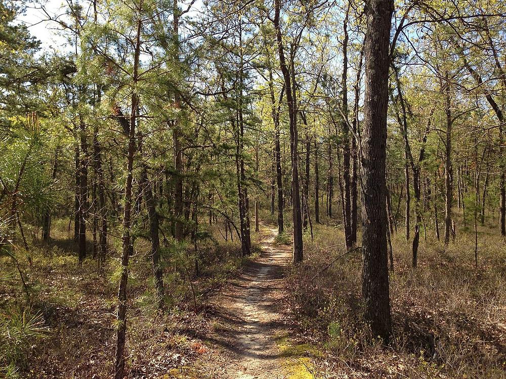 Pine barrens of the Batona Trail