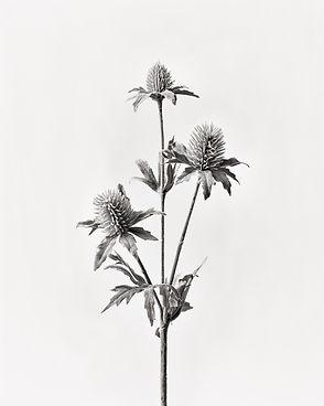 Fakeflower Roman Raacke Photography Fotograf Art Kunst