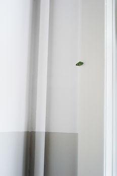Haustiere Roman Raacke Photography Fotograf Art Kunst