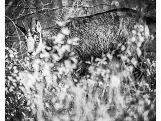 Haut Jura: une année de photos en noir et blanc