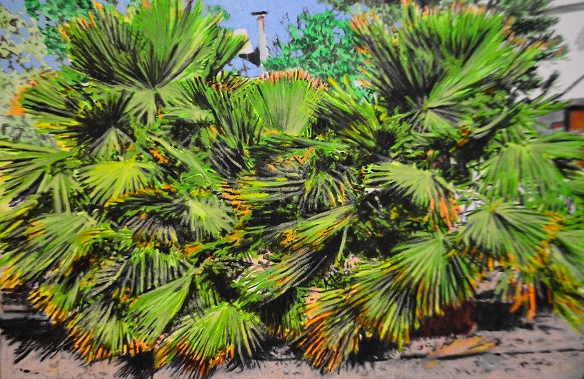 Multi palm tree