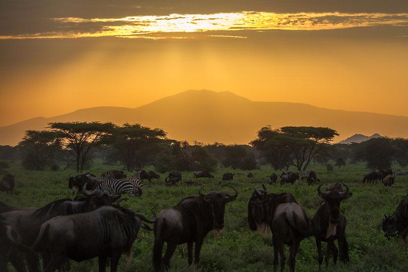 טנזניה - Tanzania