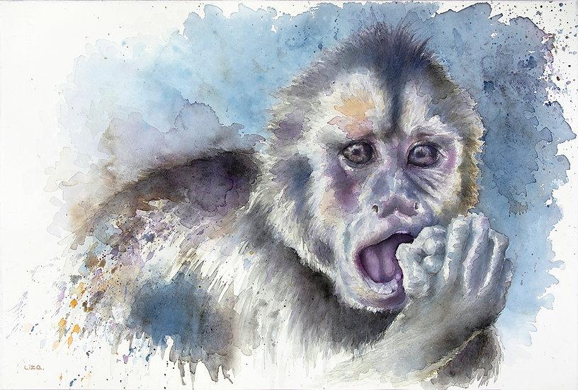 Dark Mark - Weeper Capuchin