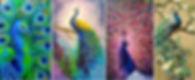 paint-bar.jpg