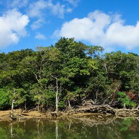 IRIMOTE ISLAND