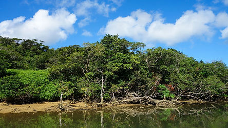 Iriomote-Island.jpg