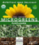 SUNFLOWER NEW PACKAGING.jpeg