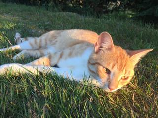 mickey au coucher de soleil