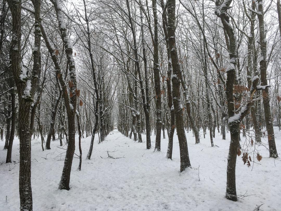 Paysage-de neige-Domaine des Faverots