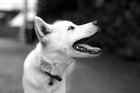 puppy-4298756_1920_edited.jpg