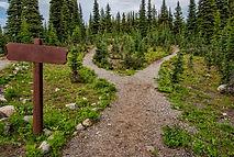 blank-conifers-crossroad-1578750.jpg