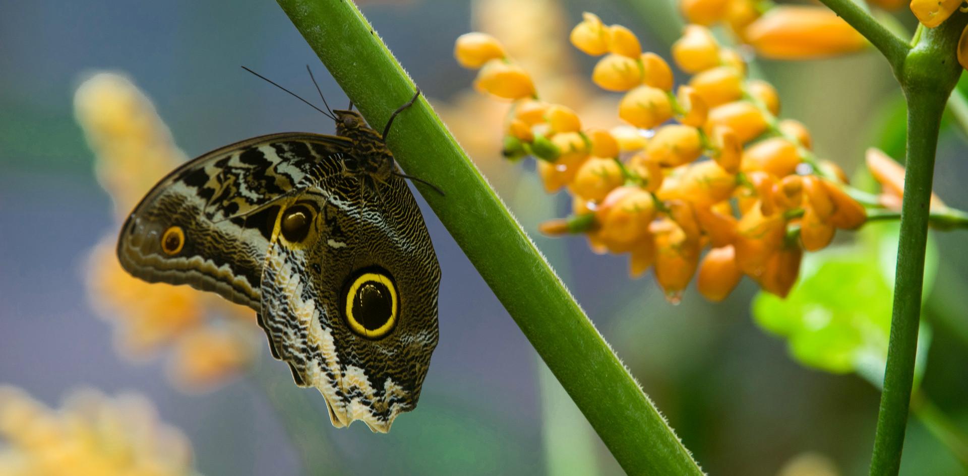 butterfly at mashpi (2).jpg