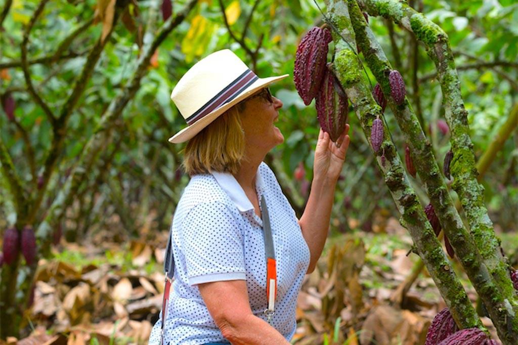 Cacao plantation  | La Danesa