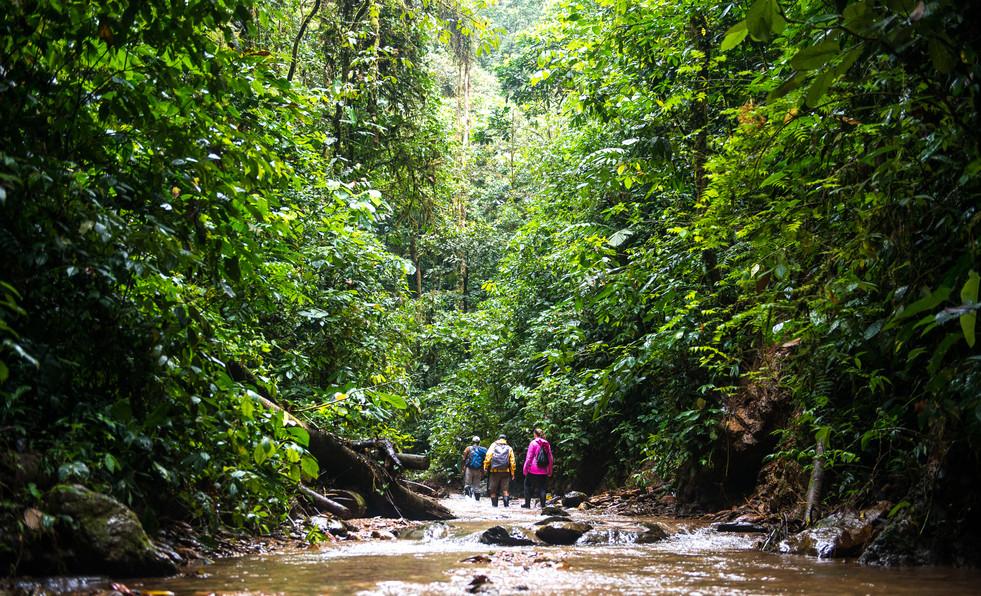 Hiking | Mashpi Lodge