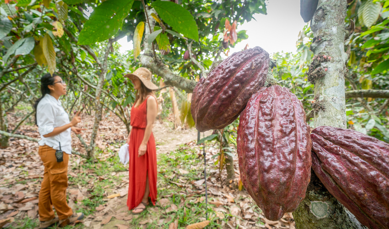 Experiencia con Cacao | La Danesa