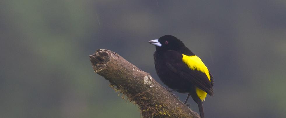 bird on branch - copia.jpg