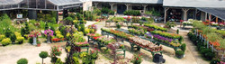 delahunty-outside-plants