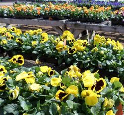 April 14 Various 058_edited