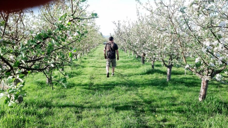 Shea and the orchard