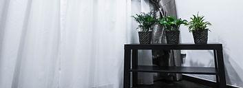 sense _ semblance - green plants.jpg