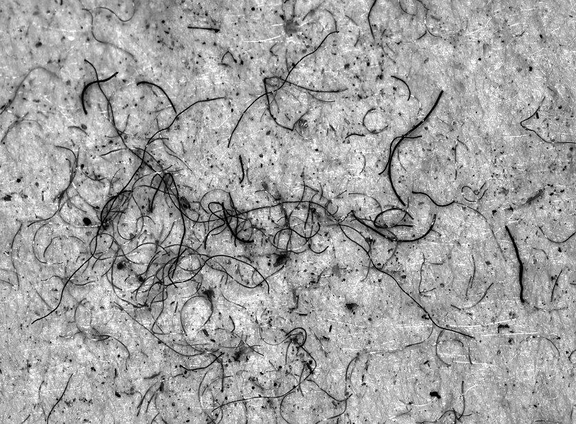Rohbild von Microplastik auf einem Glasfaserfilter, abgeschieden aus Abwasser einer Wäscherei. Bild erstellt mit der Digitalen Mikroskopkamera von Robomat