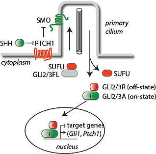 pathway schematic.png