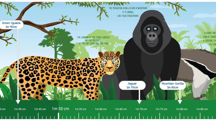 Rainforest Explorer Sticker.mp4