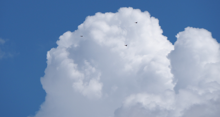 Companies investing in cloud technologies are growing more than 50 percent faster