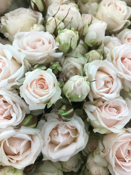 Роза Белый Баббл Кустовая