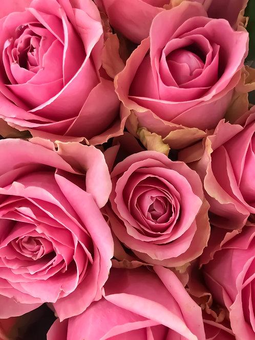 Роза Романтик