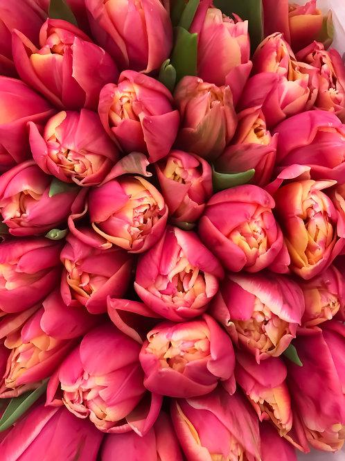 Тюльпан Огненно-Красный