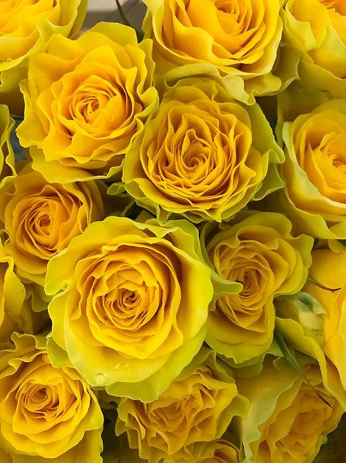 Роза Желтая Порселина