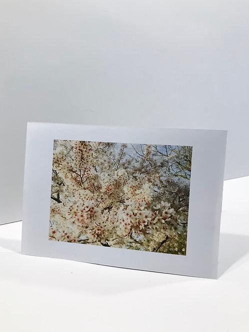 Принт Bloom Limited Edition