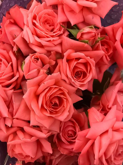 Роза Кустовая Ева